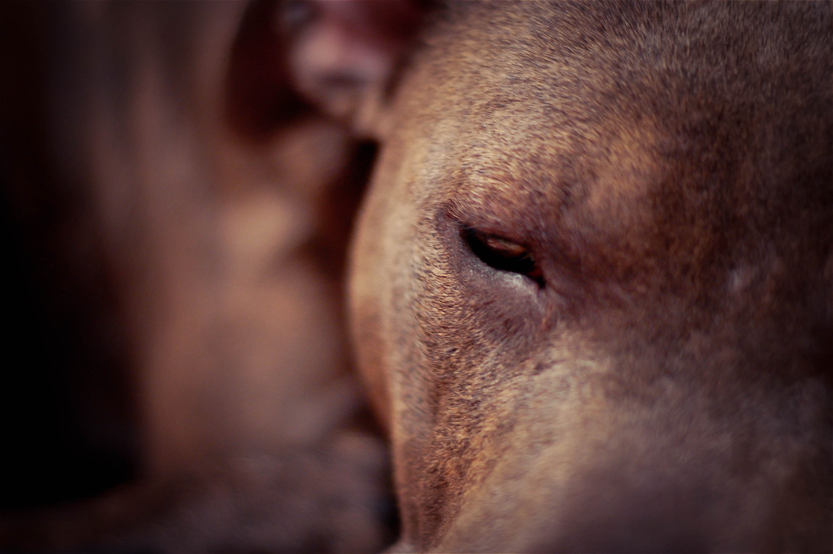 Pizza, Pitbulls and the Power of God