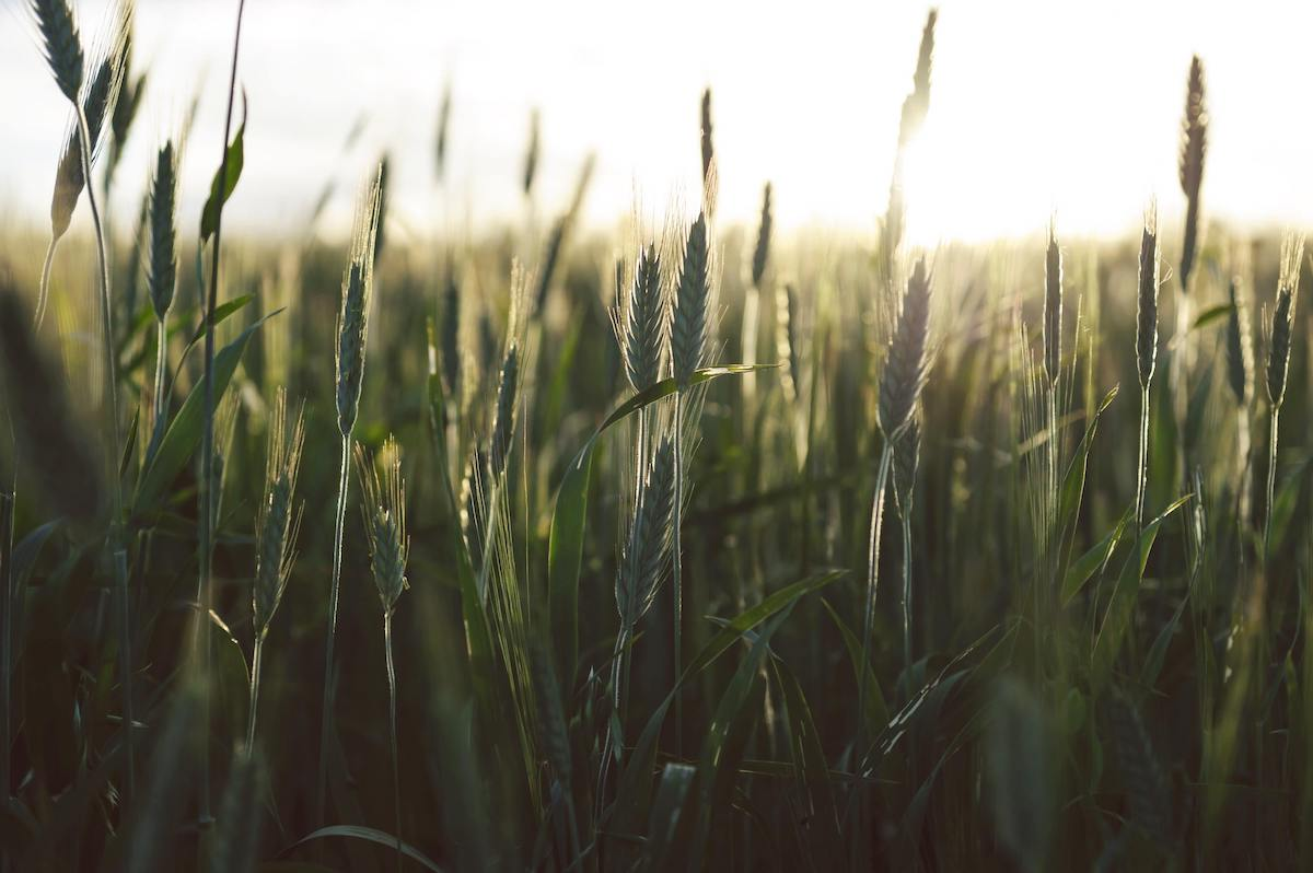 Abundance and Scarcity in Church Planting